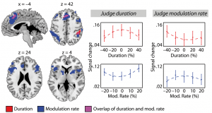 Brain regions associated with selective attending to and selective ignoring of temporal stimulus features.